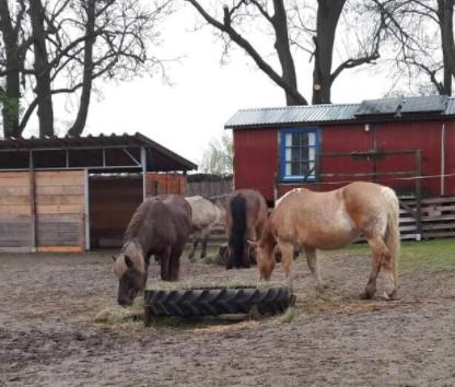 Vier Pferde in einer Koppel