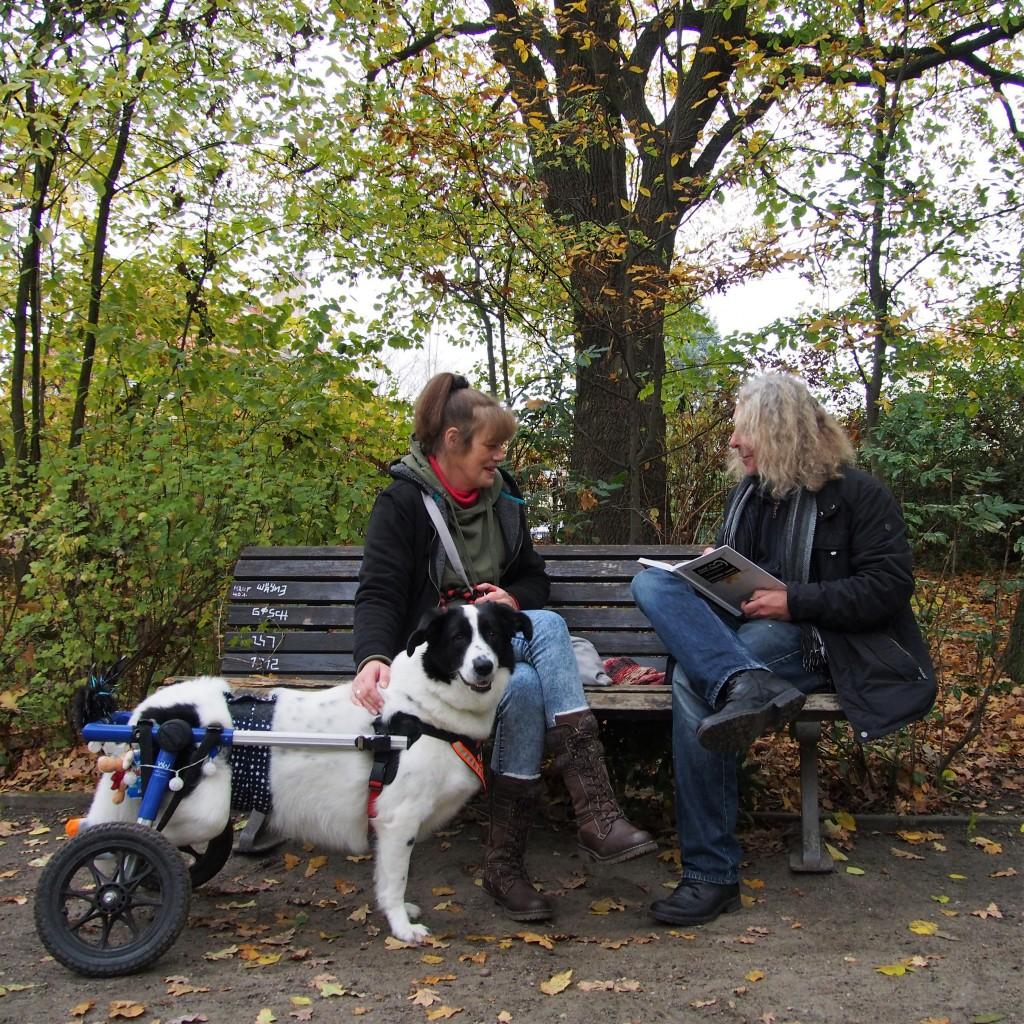 Claudia und Jens auf einer Parkbank im Gespräch, mit Hund der von Laufrädern. unterstützt wird im Vordergrund
